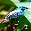 Alone blue bird slide puzzle