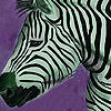 Zebras in the desert puzzle