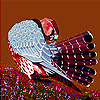 Alone mountain partridge slide puzzle