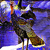 Alone pheasant in the woods puzzle